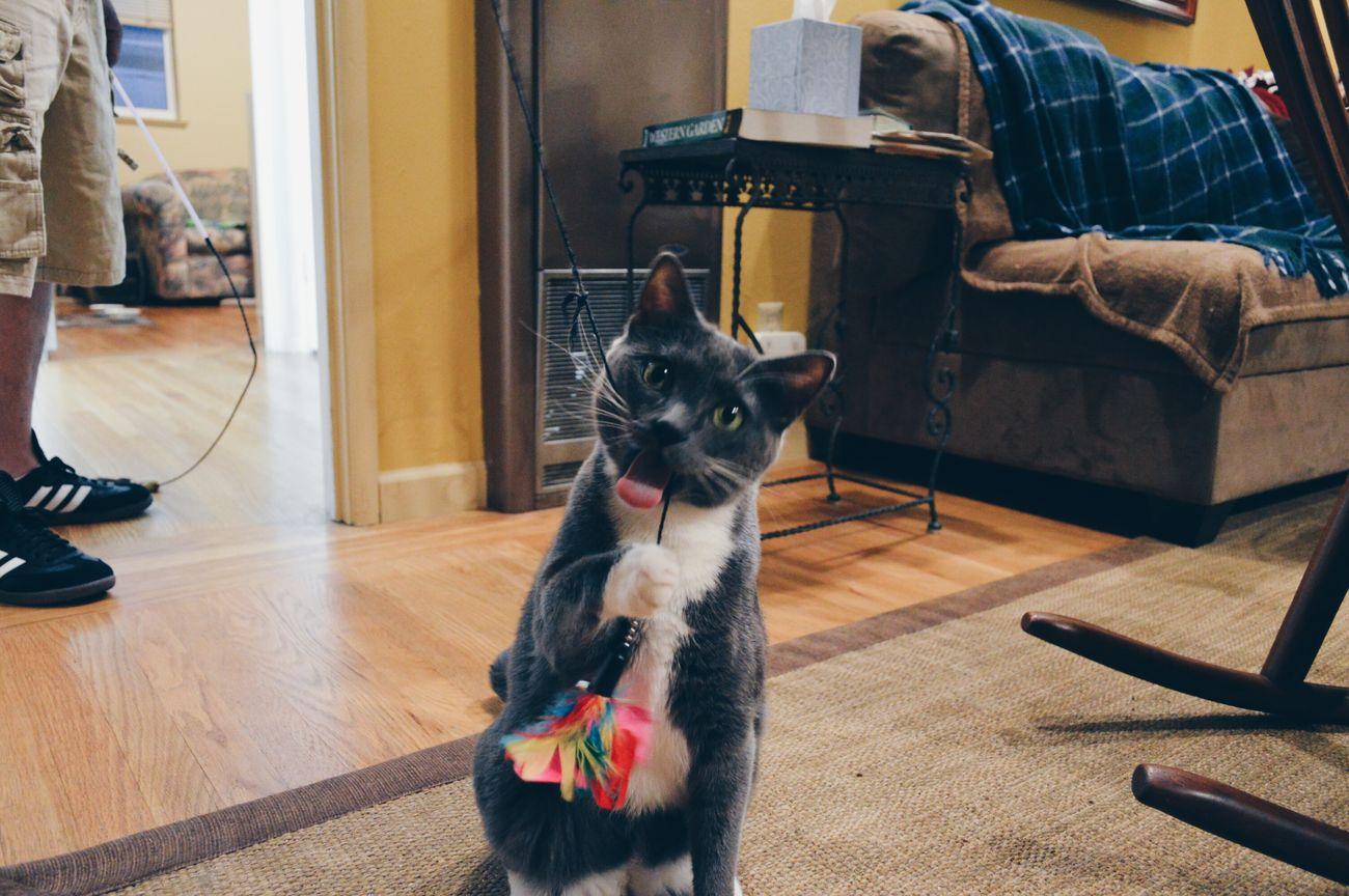 Cat Mimi