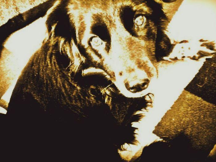 <3 Sairubers First Eyeem Photo Dog Dog❤ Pets Love