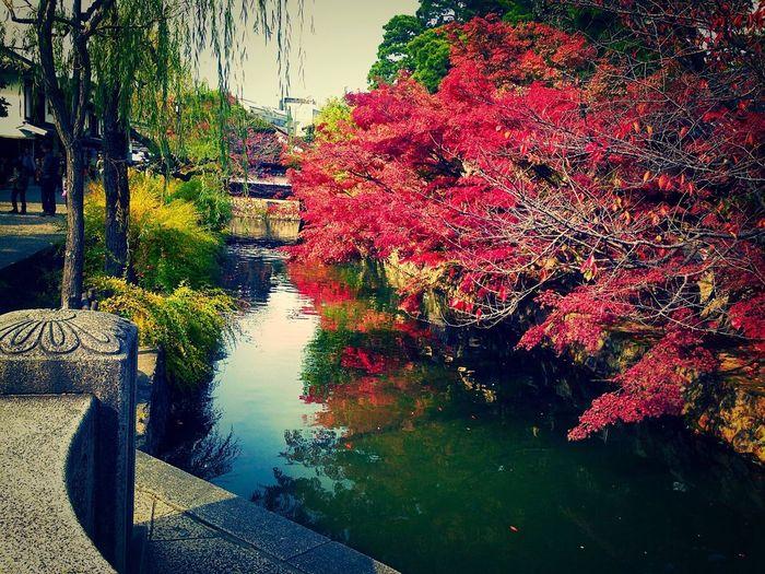 Kurashiki 美観地区