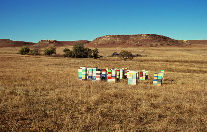 Apiary in the grasslands of western south dakota