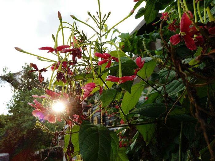 Low Angle View Evening Light Branch No People Sky Flower Beauty In Nature Close-up Eyem Gallery Mobilephotographyph Eye4photography  Eyeem Photography Eyeem Market Love To Take Photos ❤ Green Color EyeEm Nature Lover FlowerLove 🌸 Be. Ready.