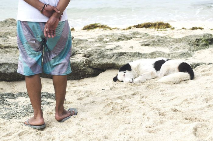 Sunday afternoon feels Dog In Beach Dog Beach Beach Life Dog Sleeping  People Of The Oceans