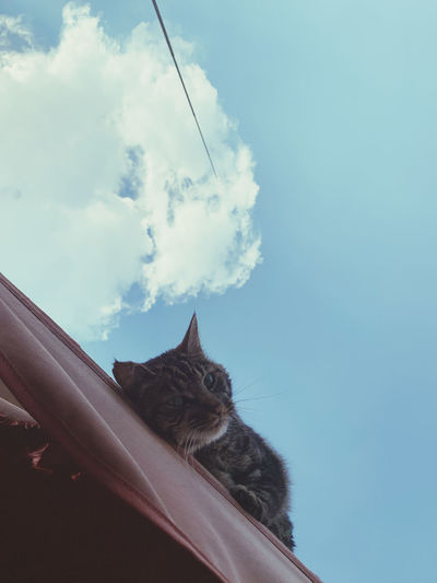 Low angle view of cat looking away against sky