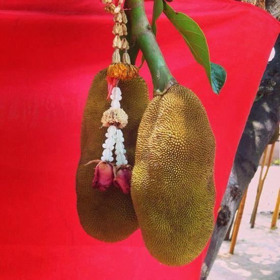 Traveling Fruit Temple Buddhalism