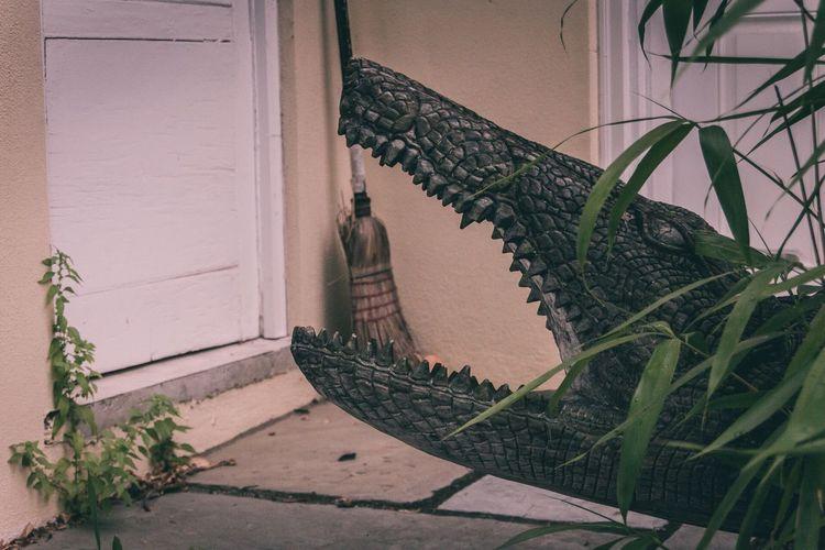 Picoftheday The Week On Eyem Showcase June EyeEm Best Shots Lambertville New Jersey Crocodile Broom