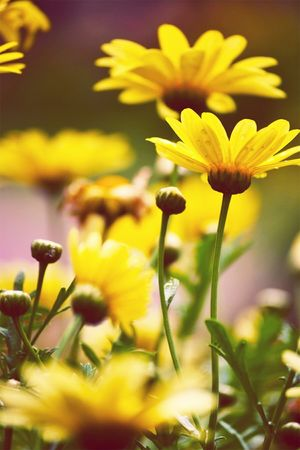 Flower Plant Yellow Nature Selective Focus Blossom Growth Fragility Uncultivated Petal Close-up Beauty In Nature Outdoors Flower Head Freshness No People Green Color Summer Day Springtime