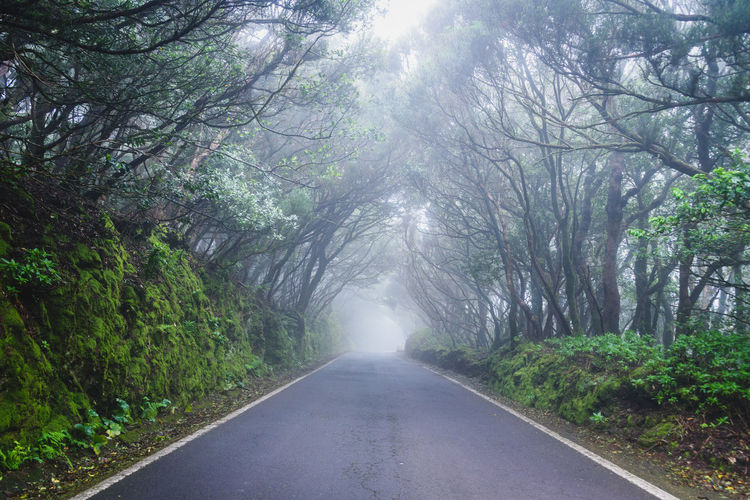 Foggy road leading through dense trees (Ganaga Mountains, Tenerife, Spain) Travel Beauty In Nature Day Diminishing Perspective Direction Empty Road First Eyeem Photo Forest Ganaga Mountains Growth Land Nature No People Non-urban Scene Outdoors Plant Road Tenerife The Way Forward Tranquil Scene Tranquility Transportation Tree vanishing point