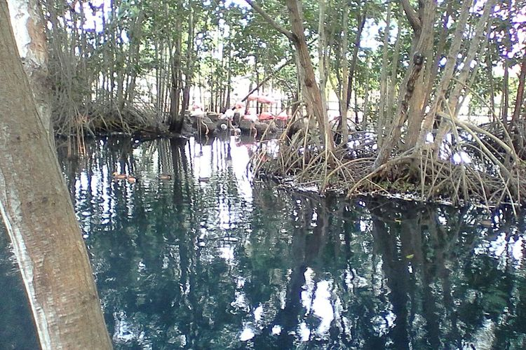 Woods In The Water Taking Photos Hello World Birds_collection Nature Trees Aguas