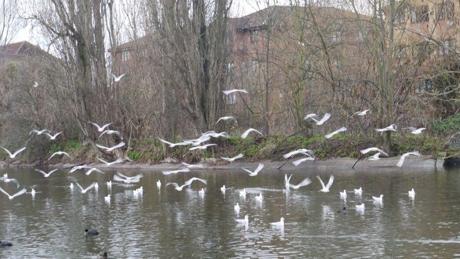 The Birds Taking Photos Nature Nature Photography Waterbirds Panasonic Lumix GX1 Nature_collection Naturelovers