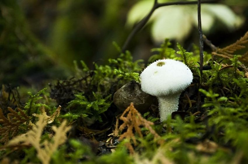 Nature On Your Doorstep Nature Forest Nature_collection Mushrooms Black And White