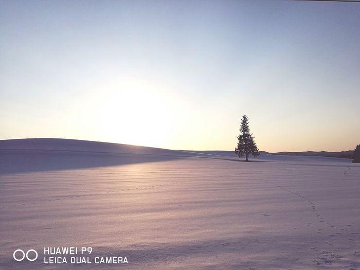 홋카이도 비에이 크리스마스트리 나무 Sunset Nature