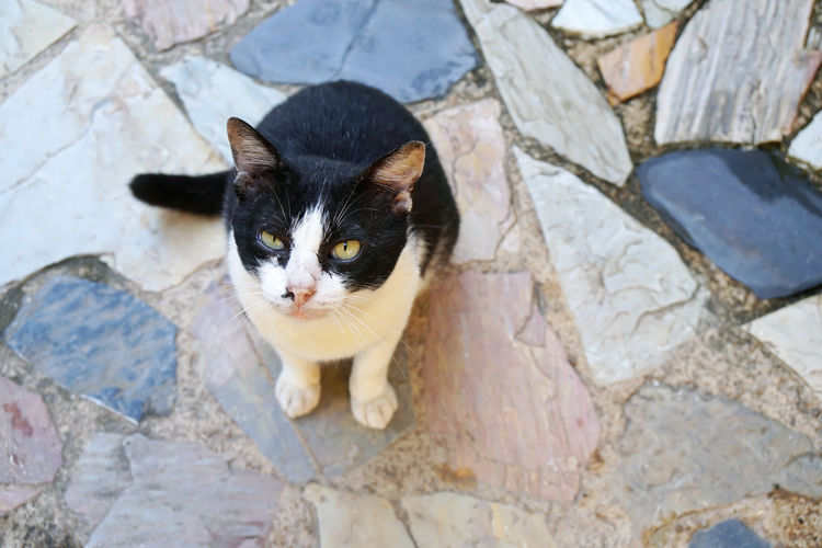 High angle portrait of black cat on rock