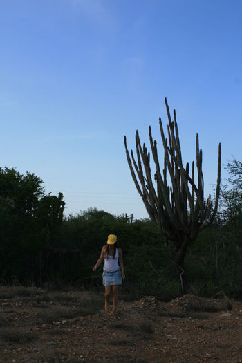 Big Cactus Cactus Casual Clothing Clear Sky Field Full Length Giant Cactus Landscape Leisure Activity Lifestyles Margarita Island Margarita, Venezuela Men Nature Rear View Sky Travel Travel Photography Traveling Hat This Is Latin America