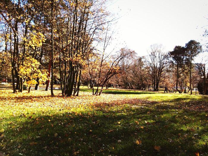 Autumn First Eyeem Photo Autumn Nature Beautiful Day