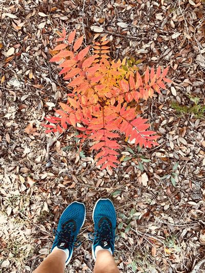 Nature Plant Leaves Walking Shoes Exercising Low Section Shoe Autumn Human Leg Standing Leaf One Person Human Body Part High Angle View Outdoors Adult One Woman Only Real People