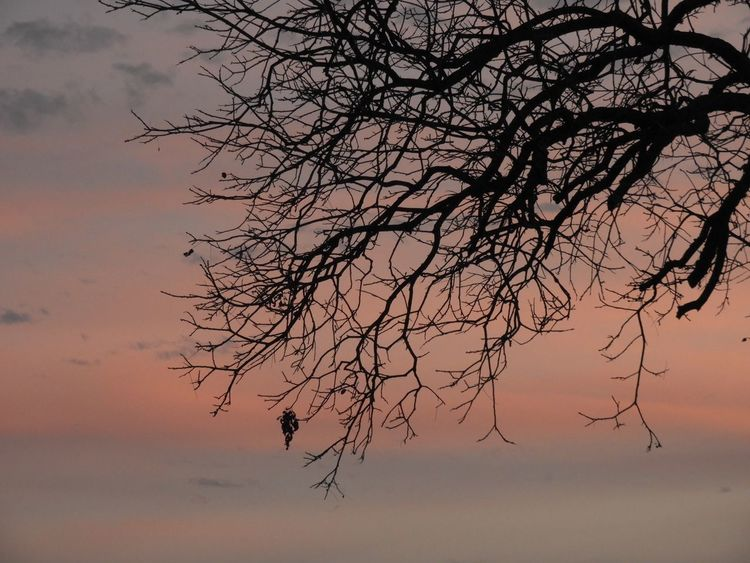 Soft sunset through branches Bare Tree Nature Beauty In Nature Tranquility Sky Sunset Tranquil Scene Branch Scenics Silhouette Tree No People Outdoors Landscape Day