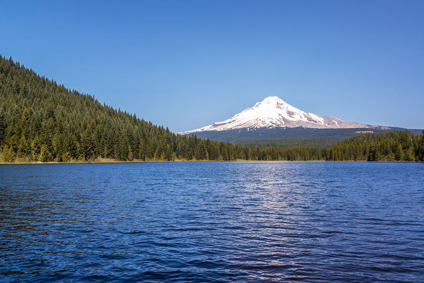 View of Mt. Hood, pine trees, and Trillium Lake in Oregon Beauty In Nature Blue Cascade Mountain Range Cascade Mountains Clear Sky Day Forest Lake Landscape Mount Hood Mountain Mountain Range Mt Hood National Forest Nature No People Oregon Outdoors Pacific Northwest  Scenics Sky Snow Snowcapped Mountain Trillium Lake Water