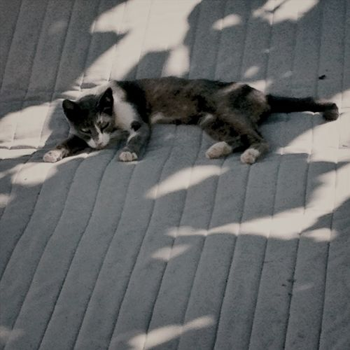 catnap RePicture Wealth Outdoors Mattress Light And Shadow