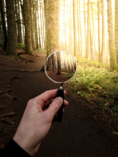 Cropped Hand Holding Magnifying Glass Against Trees In Forest