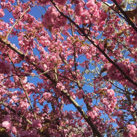 Coral By Motorola Only Lyon Lyon Spring Flowers Eyelyon Printemps Springtime Frühling