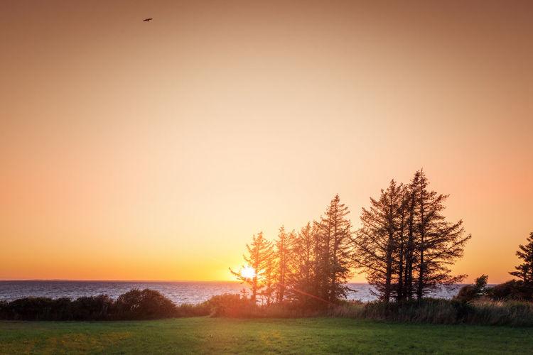 Trees on field against orange sky