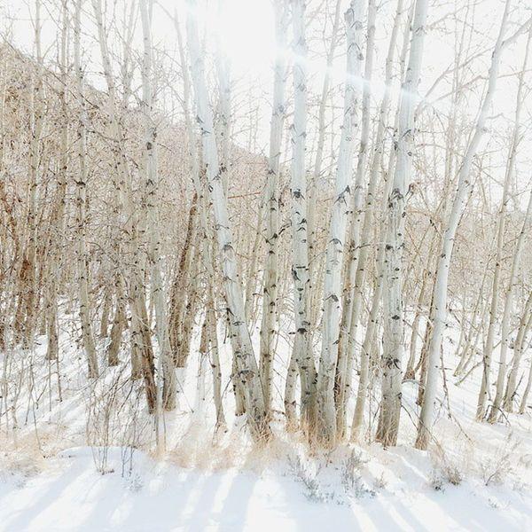 Soaking up some winter sun. Rockcreekcanyon Rockcreek Tomsplace Inyonationalforest monocounty sierranevadamountains easternsierras johnmuirwilderness california roadtrip highway395