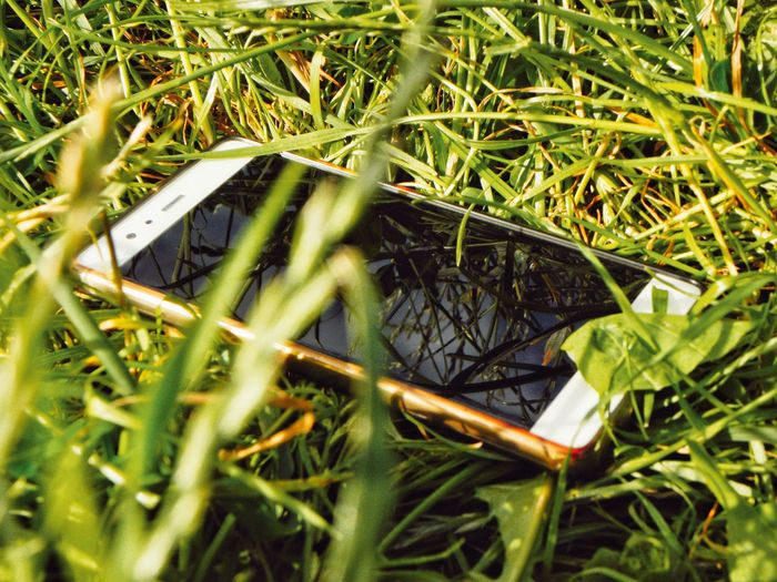 No People Green Color Outdoors Grass Close-up Phone Gadget Lost Phone Phone On The Ground Looking For My Phone Looking For A Phone Dropped My Phone Finding A Phone Phone Dropped Phone In The Grass Park Sun Sunny