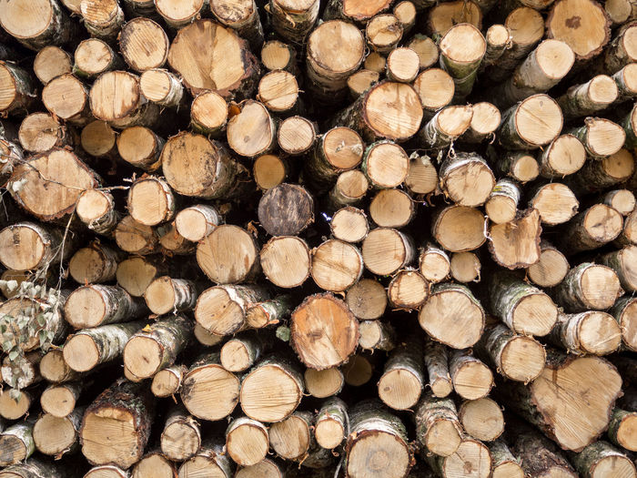 Abundance Arrangement Backgrounds Close-up Deforestation Environment Environmental Issues Firewood Forest Fossil Fuel Fuel And Power Generation Full Frame In A Row Large Group Of Objects Log Lumber Industry Order Repetition Stack Timber Wood Wood - Material Wooden WoodLand Woodpile