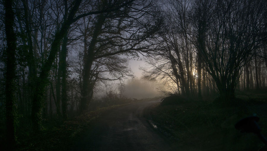 Dirt road along trees in foggy weather