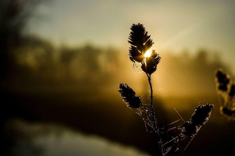 #sunset #Nature  Sun Donnieart