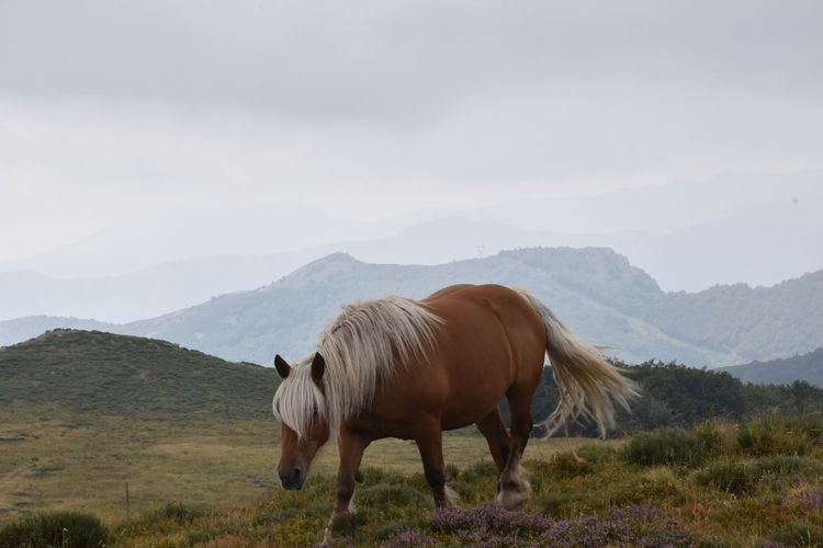 Wild free-range horse standing in a field