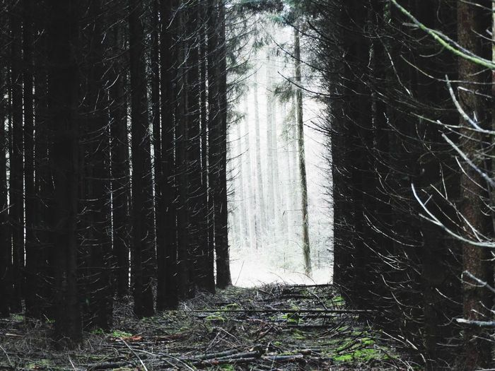 Forest Tree Tree Trunk Nature WoodLand Day Tranquility Growth Landscape Scenics Branch Beauty In Nature Woods Outdoors No People Tree Area There Is Always Light At The End Of The Tunnel.