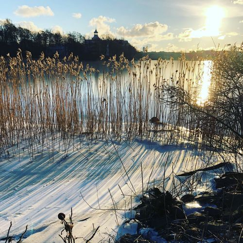 Winter morning at a lake Nature Lake Tranquility Water Beauty In Nature Tranquil Scene Sunset Sunlight Winter Scenics Outdoors Reflection No People Growth Snow Cold Temperature Landscape Sky Day