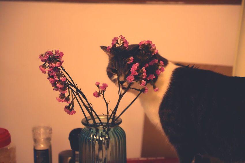 Vase Flower Indoors  Plant No People Home Interior Bouquet