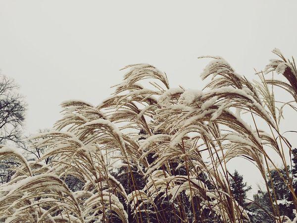 Winter Wonderland Snow EyeEm Best Shots Beautiful Nature Urban Escape Taking A Walk