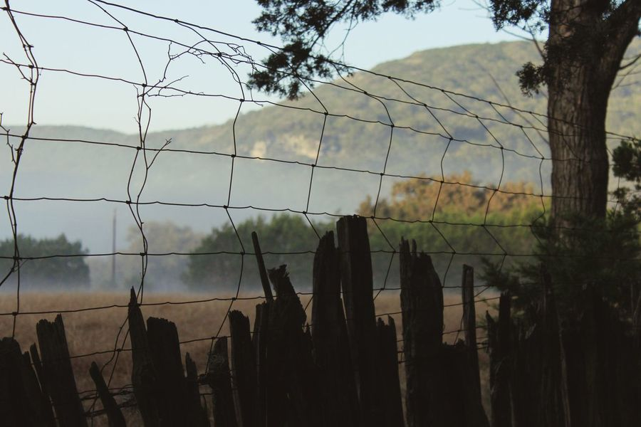 Wire Fence Wood Fence Fog Foggy Morning Field Silhouette Hill Country Hill Country Texas Tree