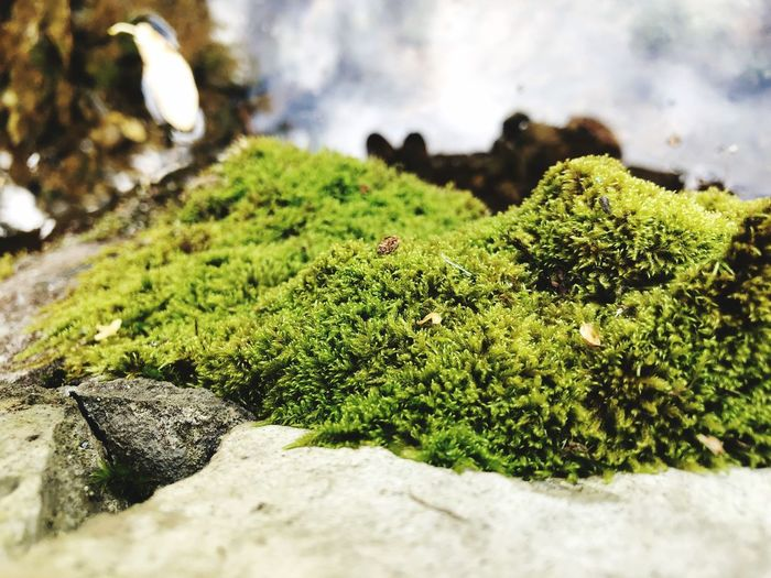 Green Color Plant Growth Day No People Nature Beauty In Nature Moss Tranquility Rock Sunlight Land Rock - Object Solid Tree Animals In The Wild Outdoors Animal Close-up Animal Themes