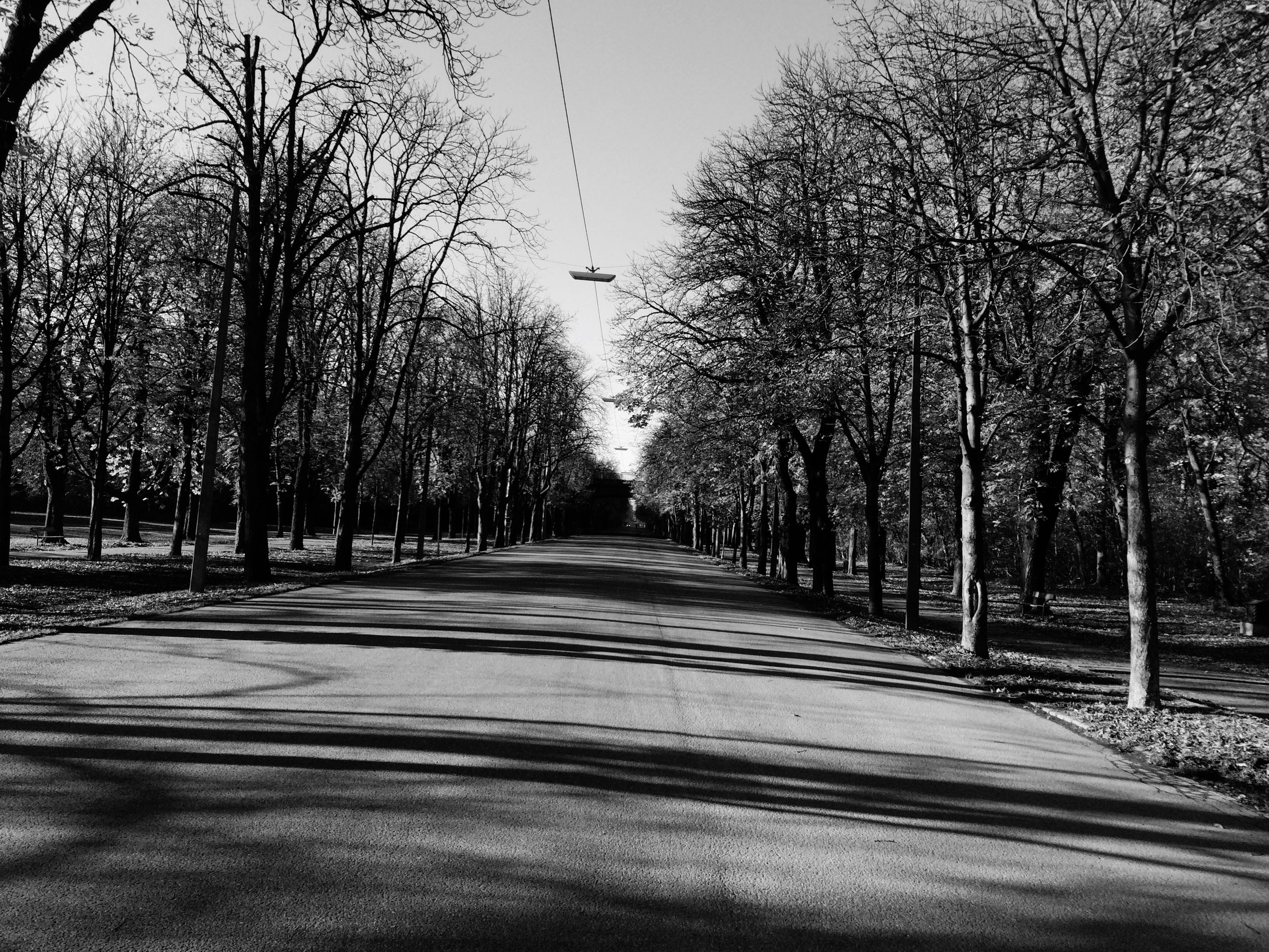 tree, the way forward, bare tree, diminishing perspective, vanishing point, treelined, tranquility, transportation, road, branch, tranquil scene, empty, long, nature, tree trunk, sky, empty road, clear sky, growth, scenics