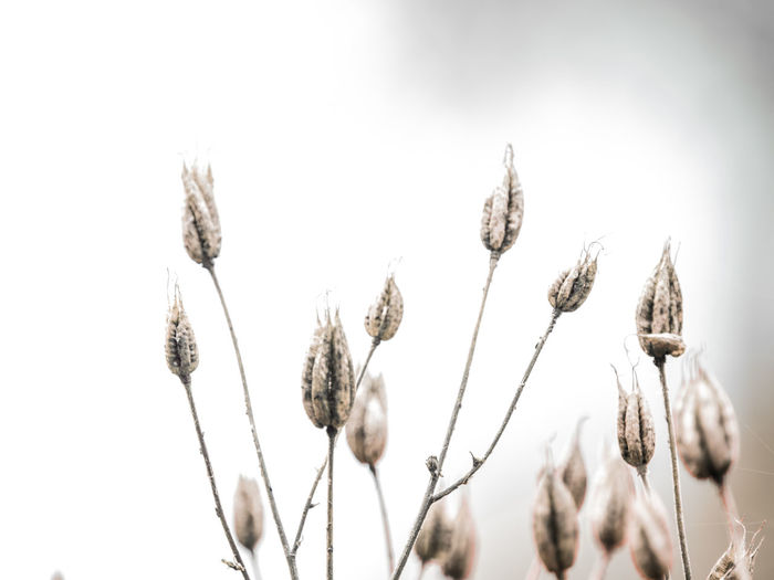 seed heads Agriculture Beauty In Nature Close-up Crop  Day Dry Field Flower Focus On Foreground Growth Land Low Angle View Nature No People Oat - Crop Outdoors Plant Plant Stem Selective Focus Sky Stalk Tranquility Wilted Plant