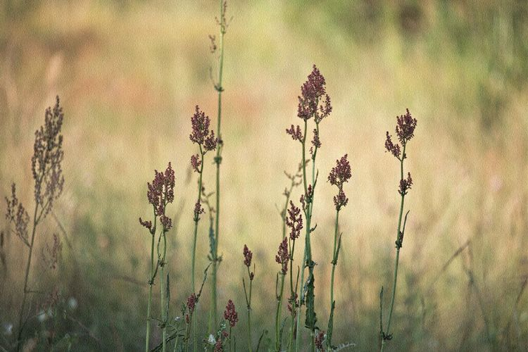 Plant Growth Beauty In Nature Tranquility Nature Focus On Foreground Flowering Plant Close-up Field Selective Focus Fragility Vulnerability  Tranquil Scene Nature_collection Nature Photography Naturelovers Lovely Beautiful Beautiful Nature Natural Beauty Walking Around Taking Pictures Fieldscape Meadow Beauty In Ordinary Things EyeEm Nature Lover EyeEm Gallery Eye4photography  Land Grass