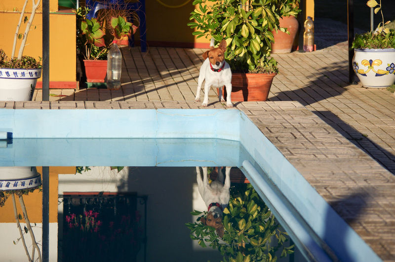 Andalusia Animal Themes Backyard Day Dog Domestic Animals Domestic Dog Flower Front Or Back Yard Mammal Nature No People One Animal Outdoors Pets Plant Potted Plant Reflection SPAIN Sunlight Swimming Pool Table Tiled Floor Wood - Material