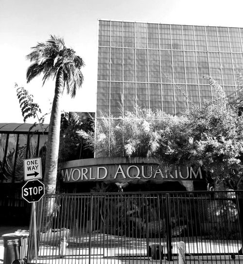 Text Building Exterior No People Built Structure Tree Architecture Communication Outdoors Day Dallas Tx World Aquarium Adapted To The City Monochrome Photography Palm Trees Street Signs Stop Sign One Way Sign