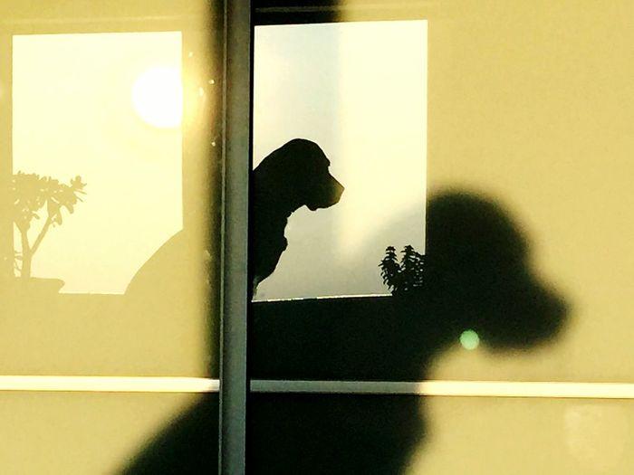 Dog sun view window shadow