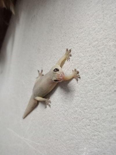 High angle view of bird on wall