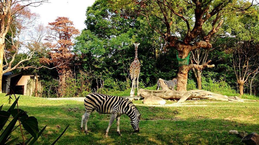 気楽にいこう TaKeItEaSy ✌ Animal Love Zoo! Large Fields Of Green 大事だね、この気持ち