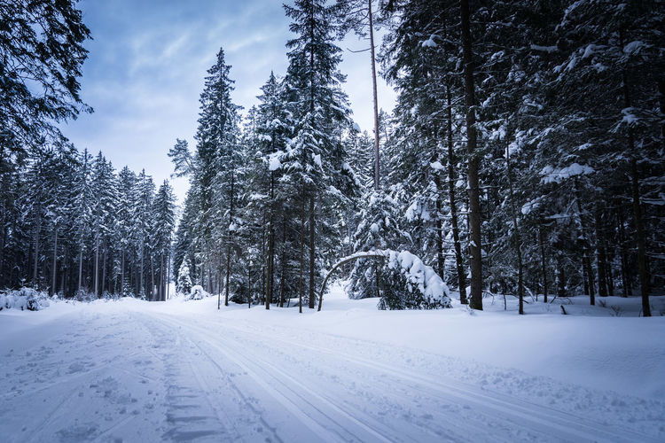 Snow Winter Cold Temperature Tree Plant Covering Beauty In Nature Tranquility Nature White Color Land Tranquil Scene Scenics - Nature Sky No People Day Road Transportation Frozen Black Forest