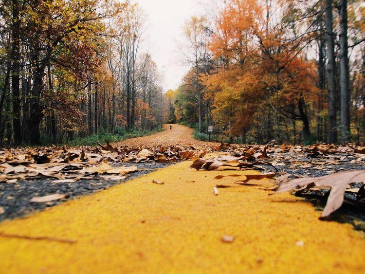 Autumn Eye4photography  EyeEm Best Shots Nature Collection