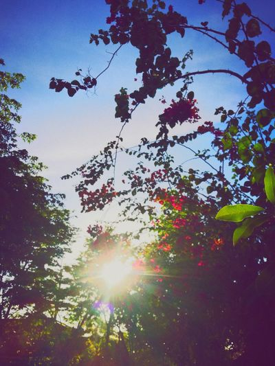 Nature Day Sky Beauty In Nature Tranquility First Eyeem Photo Tree The Great Outdoors - 2017 EyeEm Awards