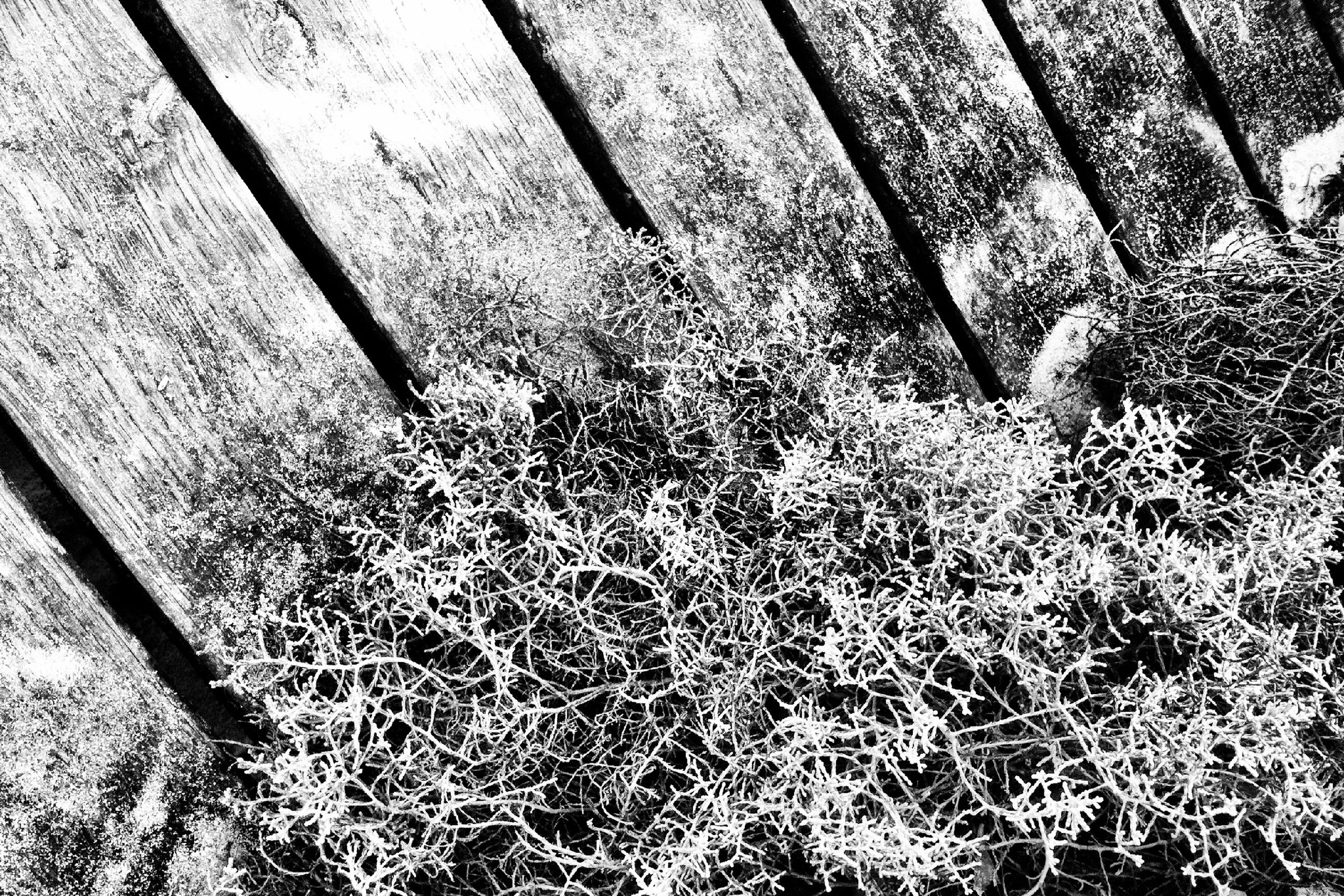 metal, high angle view, wall - building feature, close-up, abandoned, shadow, damaged, textured, old, day, no people, metallic, wood - material, sunlight, outdoors, plant, obsolete, rusty, grass, growth