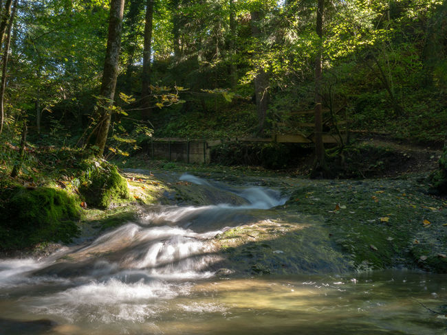 Beauty In Nature Blurred Motion Day Environment Flowing Flowing Water Forest Green Color Growth Land Motion Nature No People Outdoors Plant Power In Nature Scenics - Nature Stream - Flowing Water Tranquility Tree Water